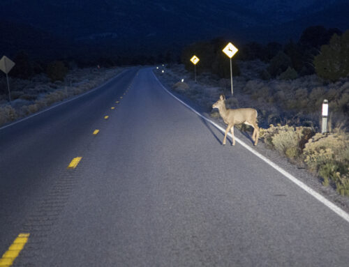 5 Tips to Avoid Colliding with Wildlife